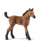 Quarter Horse Fohlen