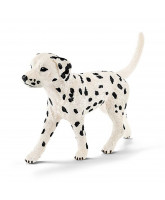 Dalmatiner Rüde