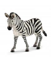 Zebra Weibchen
