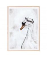 Poster Proud Swan 50x70 cm