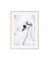 Poster Proud Swan 30x40 cm